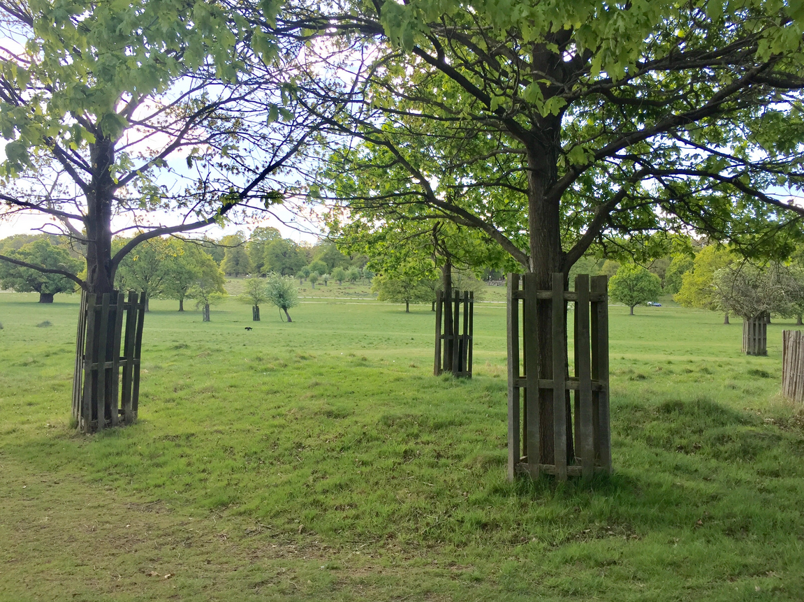 Richmond Tree Guard Gates Amp Enclosures Countryside